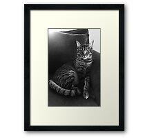Serious Cat Framed Print