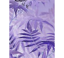 Lavender Leaves  Photographic Print