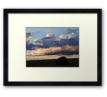Swarming over the hay bales Framed Print