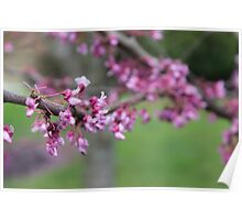 Real pretty pink flowers Poster