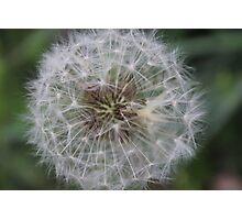 Wishing plant Photographic Print