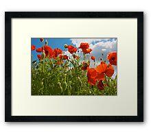 Poppy Time Framed Print