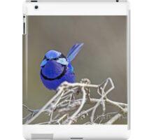 The Splendid Wren iPad Case/Skin