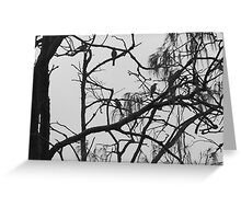 Fig Birds silhouette  Greeting Card