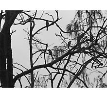 Fig Birds in b & w  Photographic Print