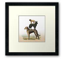 phil jarry - dogs - 003 Framed Print