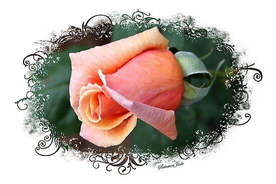 A Dream of a Rosebud by SummerJade