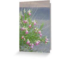 Elegant Desert Willow Greeting Card