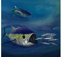 Yellowfin chase Photographic Print