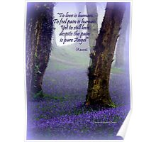 Bluebells and Rumi Poster