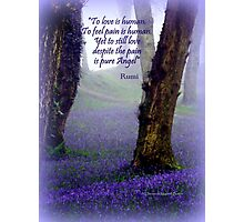 Bluebells and Rumi Photographic Print
