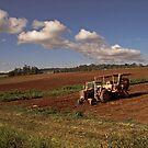 Farm on Atherton Tableland by Celeste Mookherjee