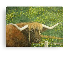 Highland Cow and Dandelions, New Zealand Canvas Print