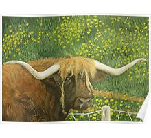Highland cow and dandelions Poster
