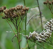 wild grasses 14 by vigor