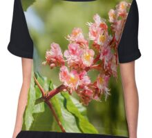 Aesculus x Carnea, or Red Horse-chestnut Flower Chiffon Top