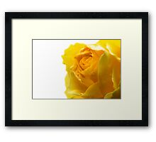 Closeup of Yellow Rose on White Framed Print