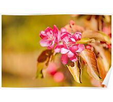 Paradise Apples Flowers Poster