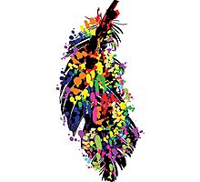 Colorful feather Photographic Print