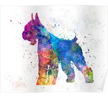 Giant Schnauzer 01 in watercolor Poster