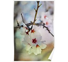 Almond tree flowers in watercolor Poster