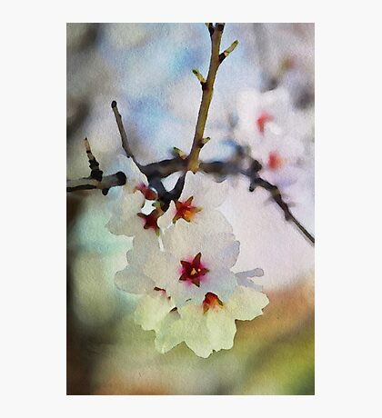 Almond tree flowers in watercolor Photographic Print
