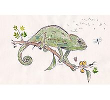 The colourful world of Chameleons Photographic Print