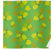Birch leaves green background Poster