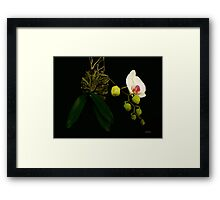 San Juan Orchid Framed Print