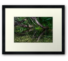 Pond Reflections of Peace and Serenity Framed Print