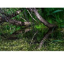 Pond Reflections of Peace and Serenity Photographic Print