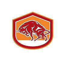 European Bison Charging Shield Retro by patrimonio