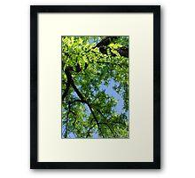 Green Skies  Framed Print