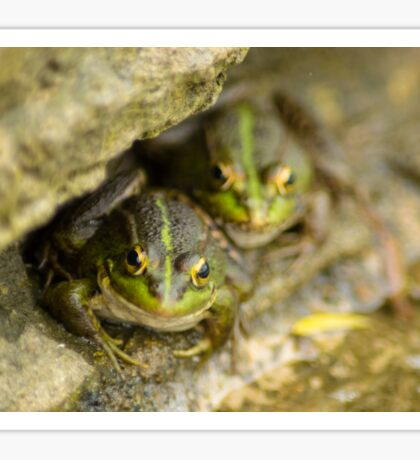 Pair of Iberian Green Frogs Sticker