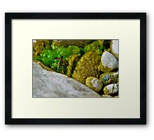 Been Bee-sy Framed Print