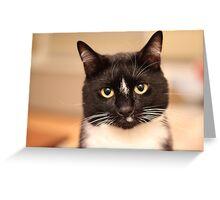 Sammy's Soul Greeting Card