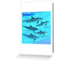 Know Your Stenella Dolphins Greeting Card