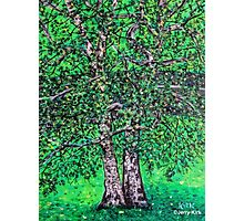 'Elm Trees' (Plein Air Painting) Photographic Print