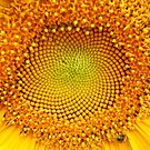 Sunflower Center 6 by Kevin J Cooper