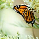 Monarch Morning by Liz Grandmaison