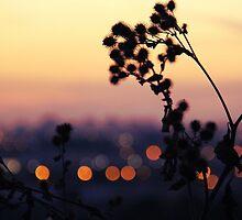 Sweet Summer Lights by Ruta Rudminaite