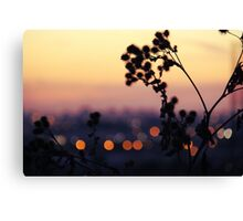 Sweet Summer Lights Canvas Print