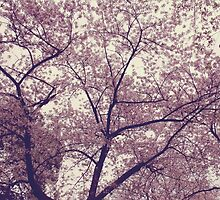 Cherry Blossoms  by Ruta Rudminaite