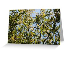 Twisted Willow in Sun Greeting Card
