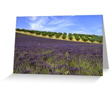 Lavander in Provence Greeting Card