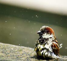 Bathing Time by Cristy Hernandez