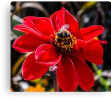 The Bumble Bee Canvas Print