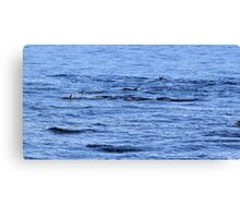 Dolphin Fins Canvas Print