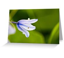 Ohio Bell Flower Greeting Card