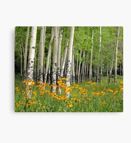 Aspen Grove and Wildflower Meadow Canvas Print